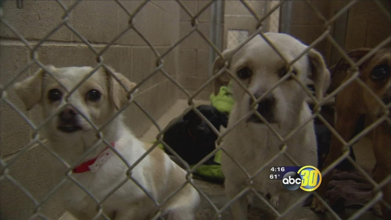 Pet overpopulation in the valley and how one city is becoming a no-kill community