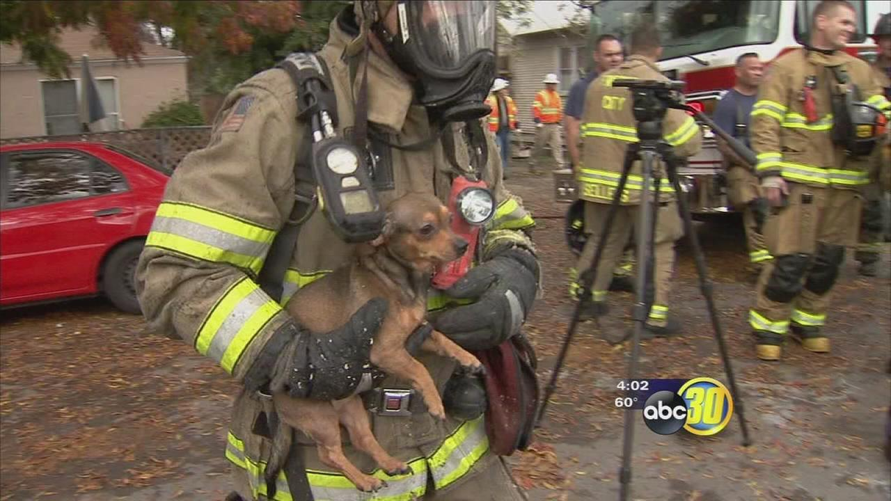 112116-kfsn-4pm-pet-rescue-vid