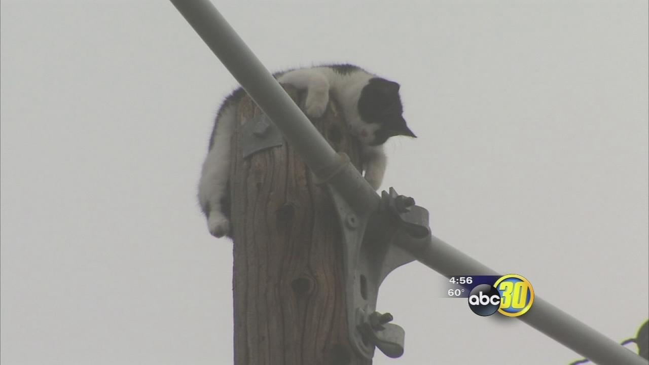 Family cat stuck at top of 45-foot power pole for at least 6 days in Southwest Fresno