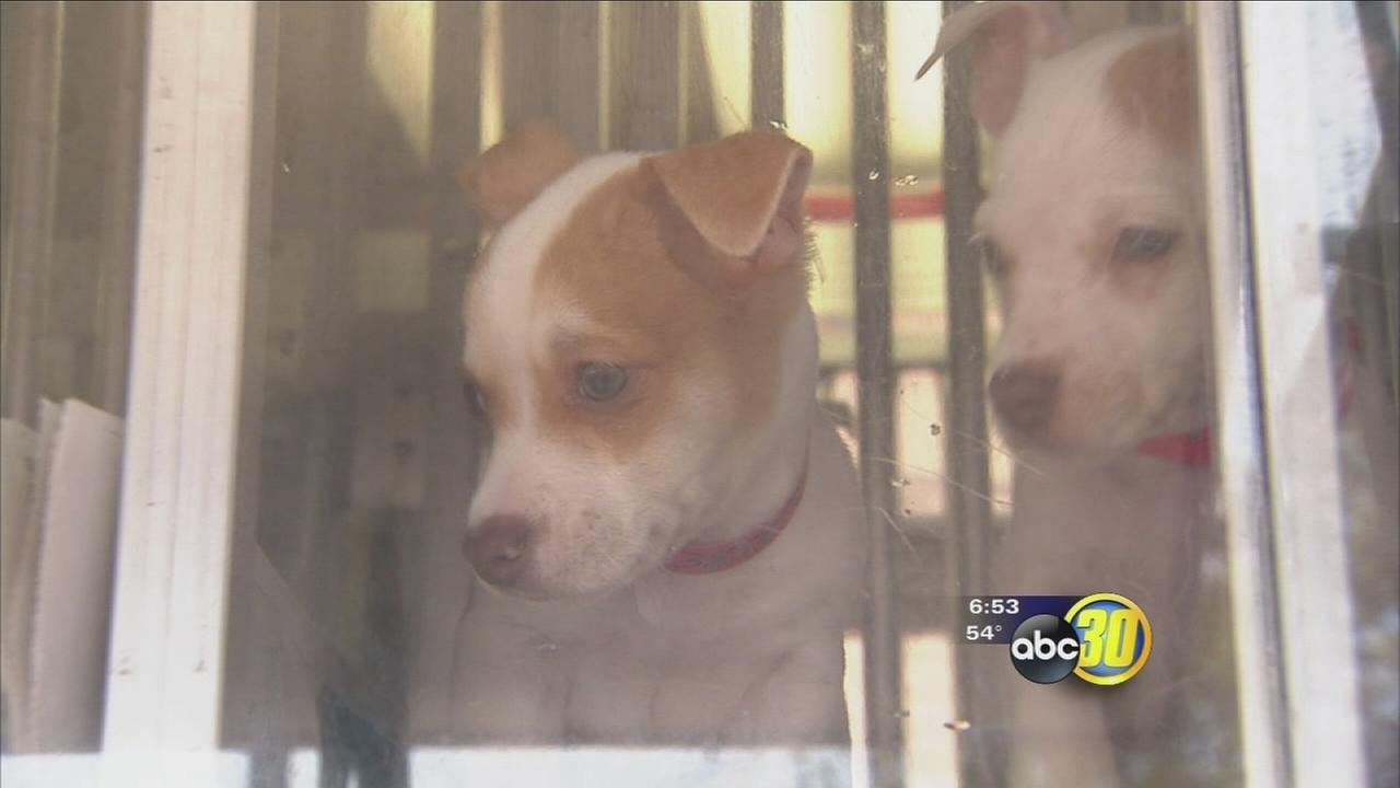 112516-kfsn-6pm-animal-shelter-vid