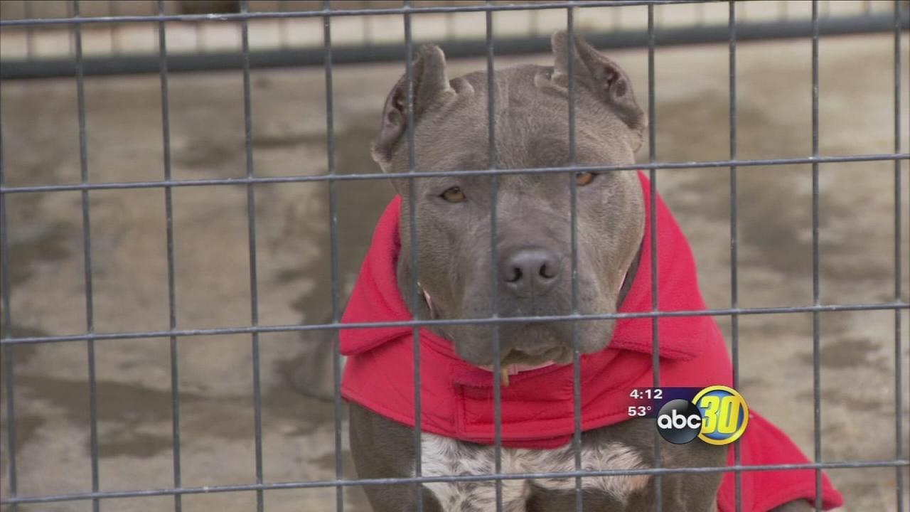 Valley animal shelters looking for community help to keep pets warm in the winter