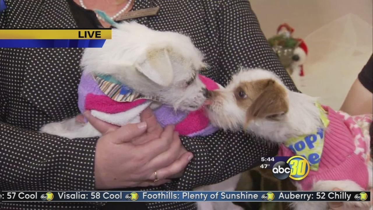 Valley Animal Centers Kitty Christmas and Merry Mutts