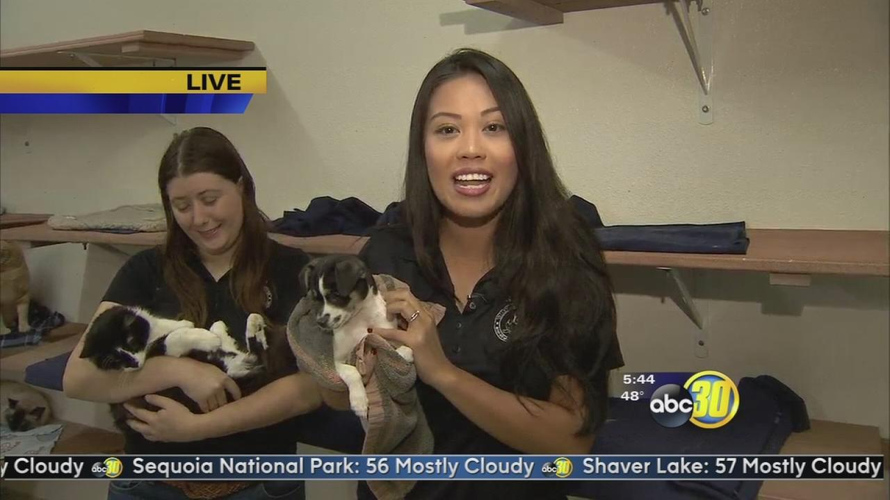 Valley Animal Center hosts Snow Pet camp for kids