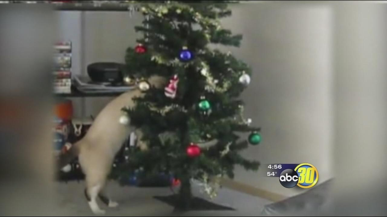 Pet proofing the holidays