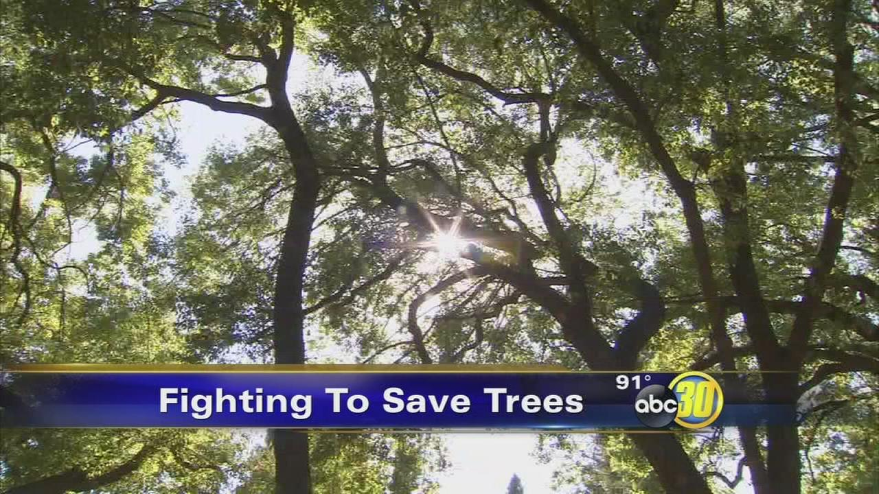 Shady Lane residents fight to keep massive trees