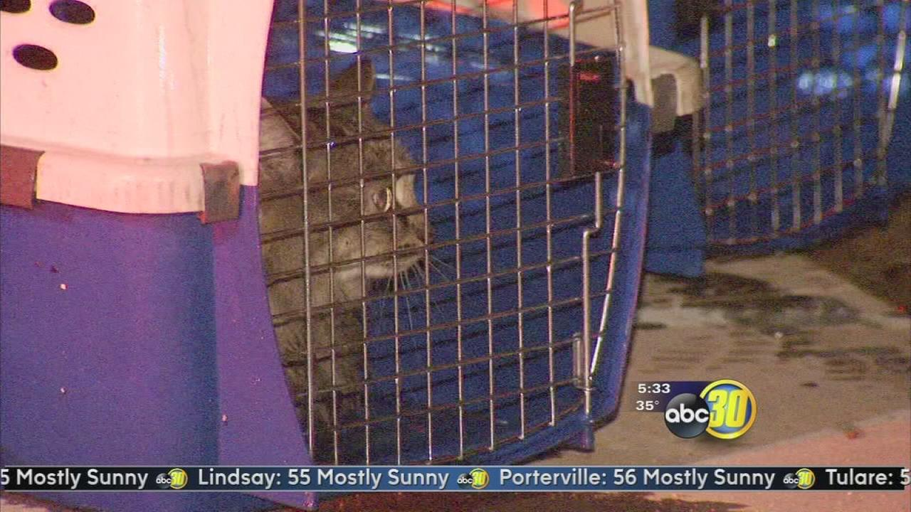 4 cats rescued in commercial fire in Northwest Fresno