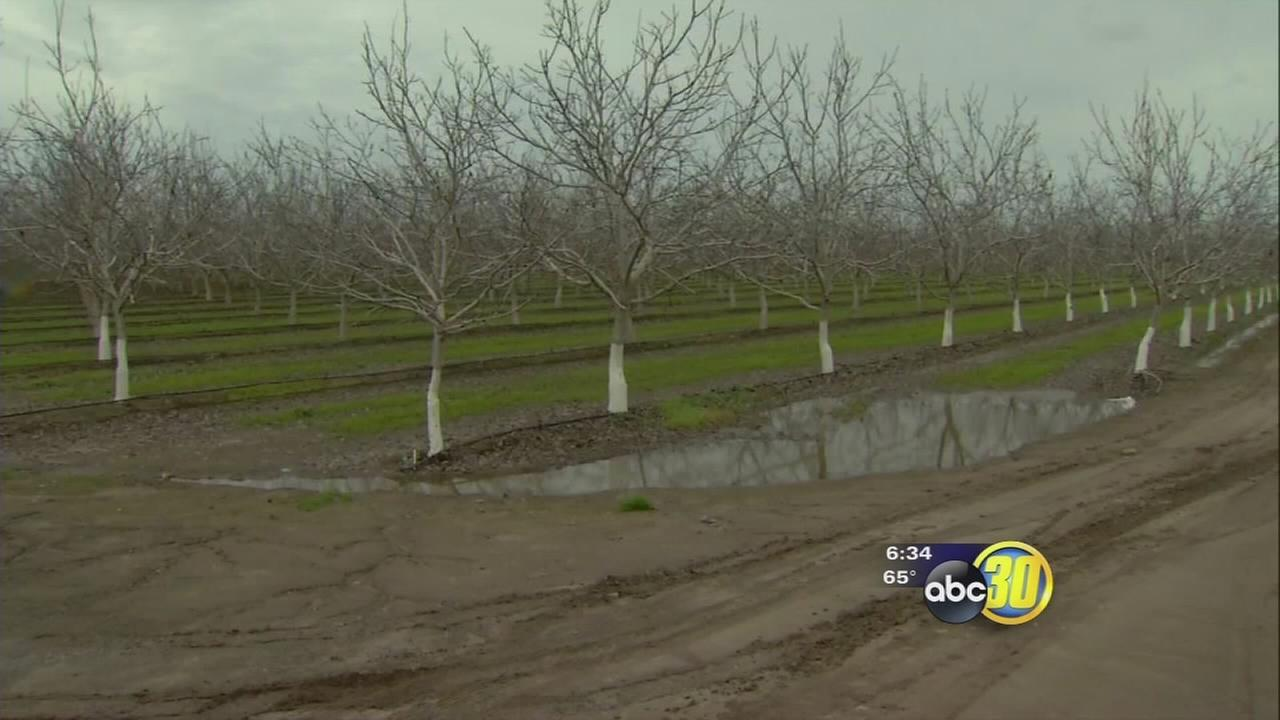 Wet weather has causing some complications for Valley growers