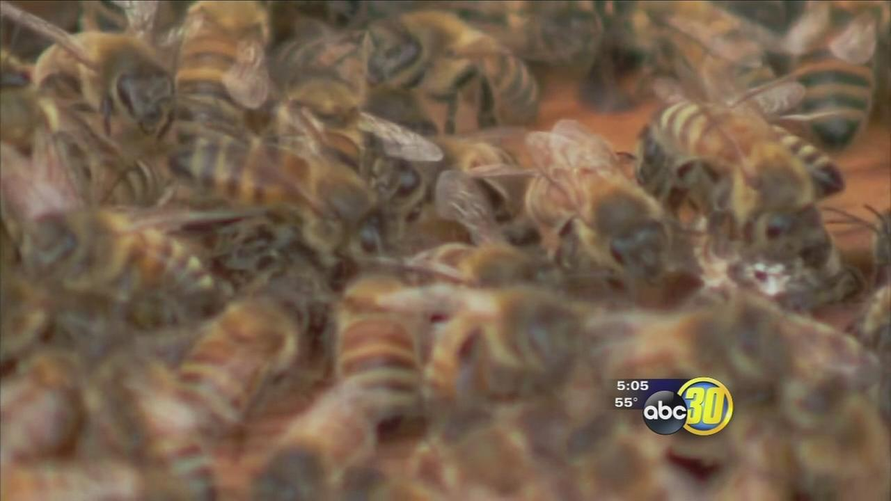 Wet weather making it difficult for bees to pollinate