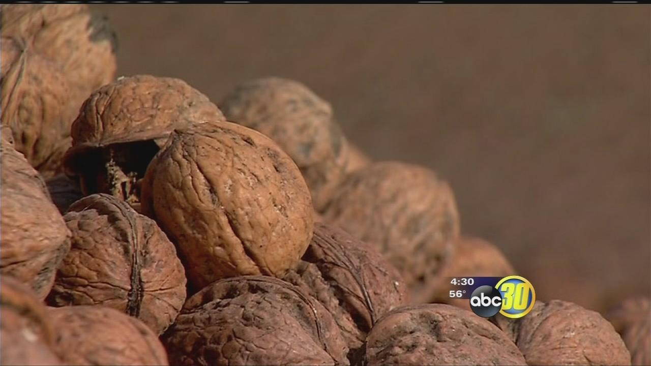 With goal of eliminating theft, Tulare County Walnut ordinance could soon change