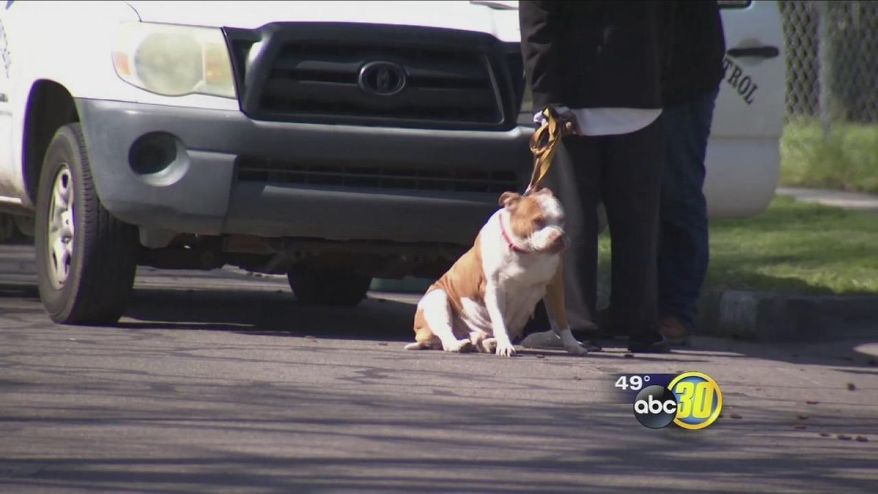 Fresno Police say officer forced to fire gun after being attacked by dogs