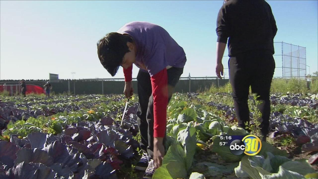 Kerman High students receive hands-on lesson in farming