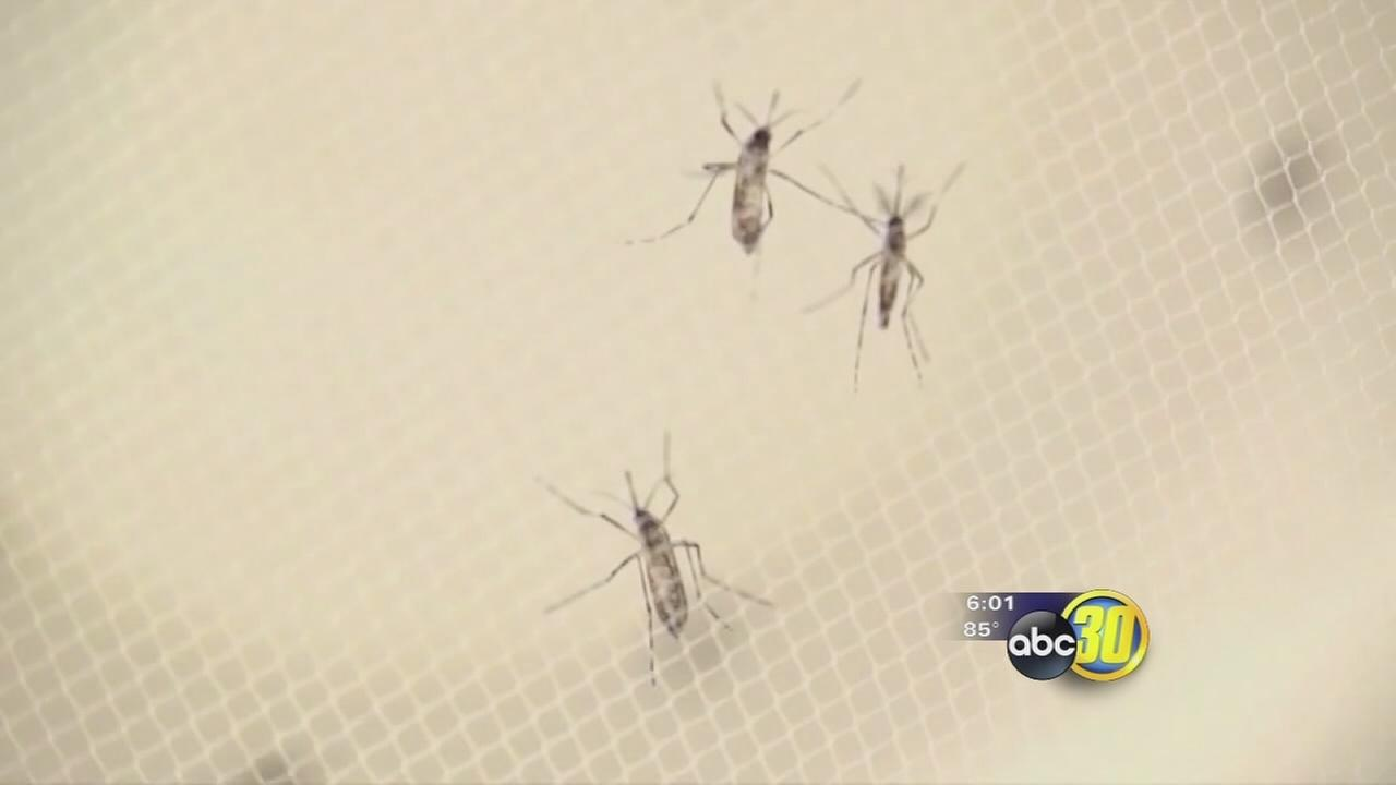 Mosquito season starting early and so are the efforts in the Valley to stop bugs from biting