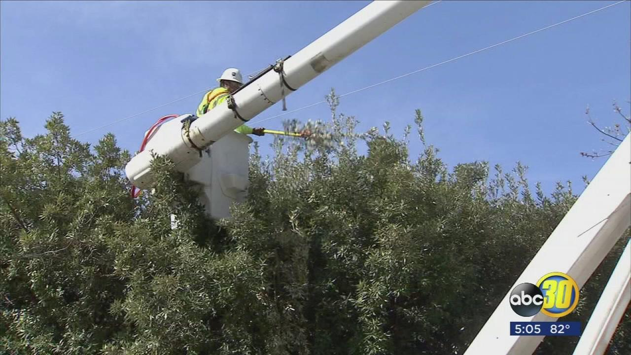PG&E concerned about tree branches to close to power lines as storm looms