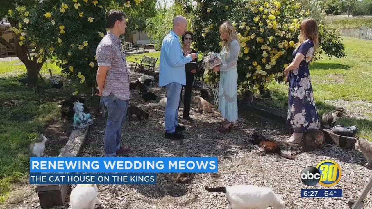 Hundreds of cats play witness as California couple renews wedding vows