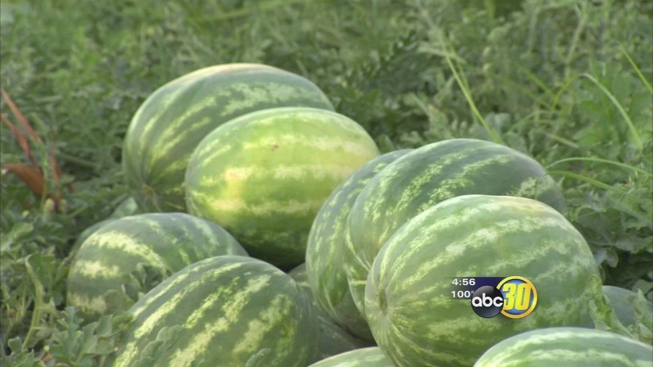 Made in the Valley: Sarabian Farms Watermelon