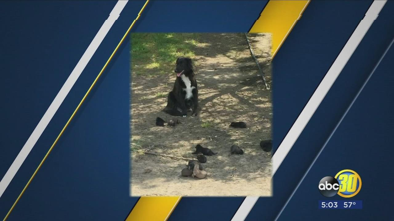 11 puppies abandoned on the side of the road in Madera