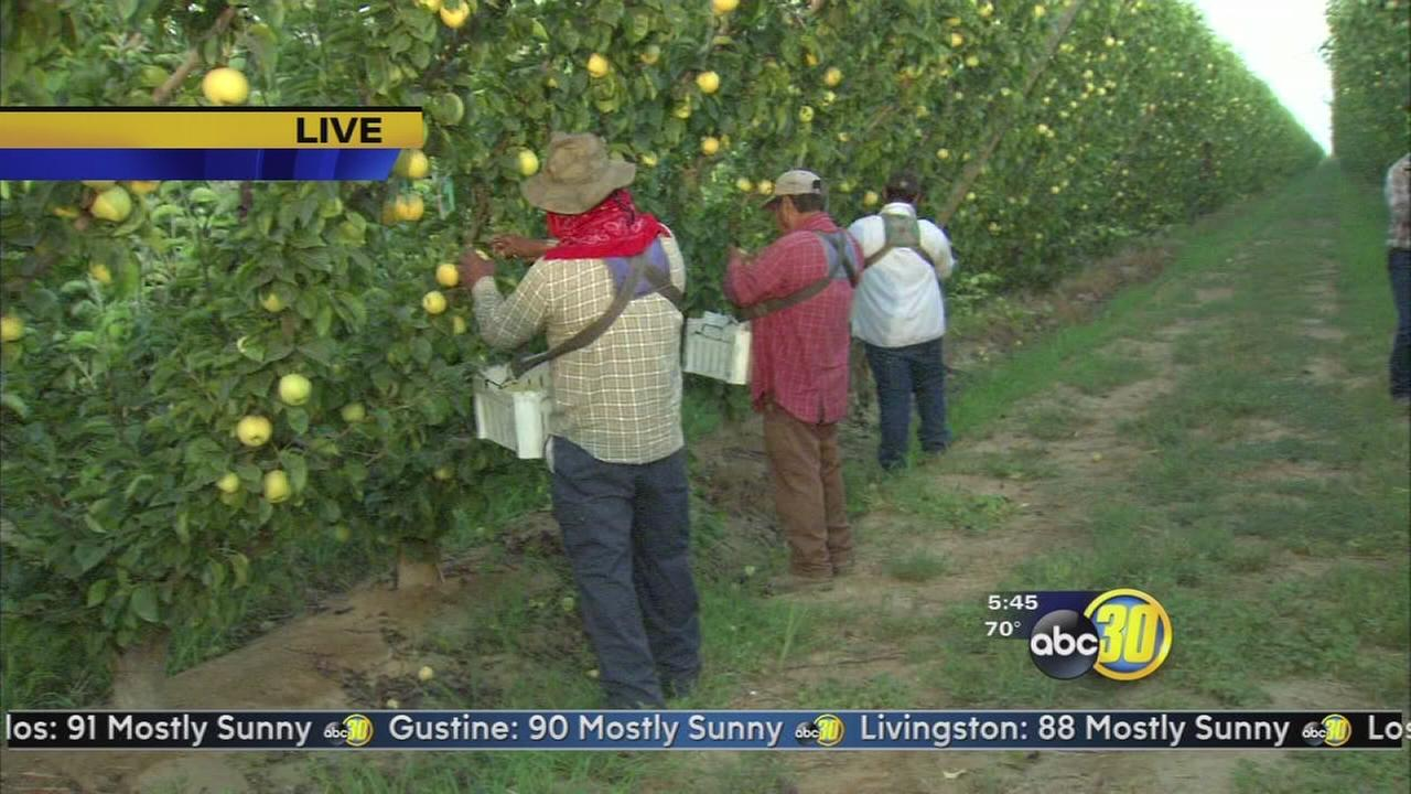 Made in the Valley: Kingsburg Orchards | 1 of 2