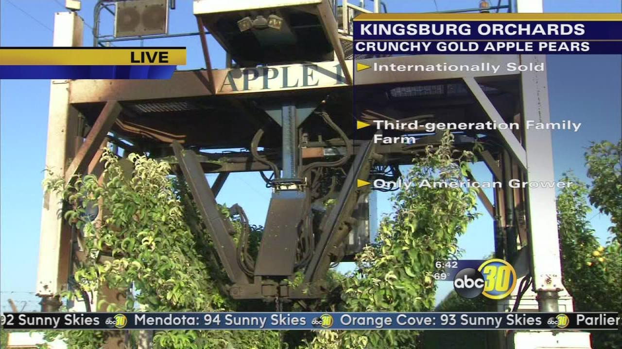 Made in the Valley: Kingsburg Orchards | 2 of 2