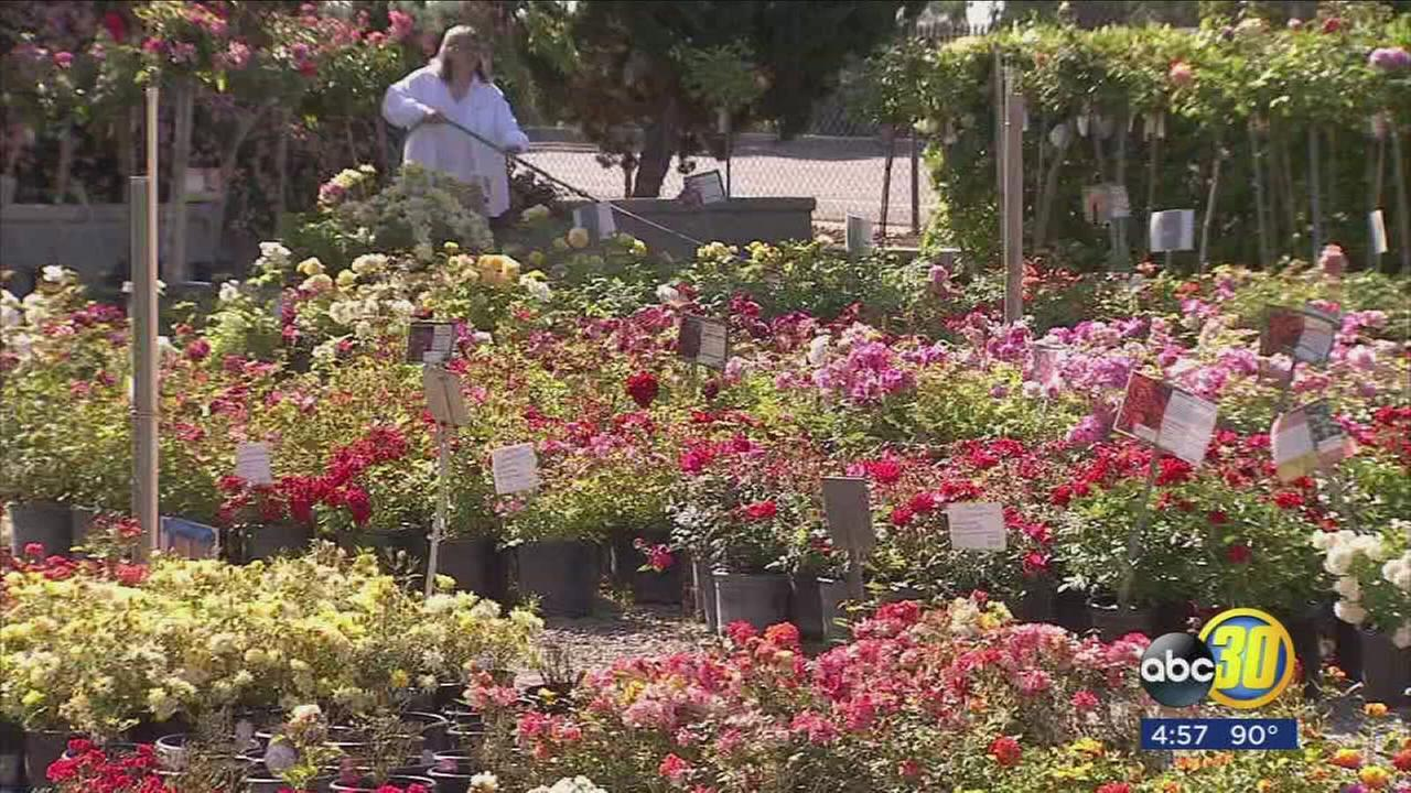 Spring sunshine has business booming for Valley nurseries