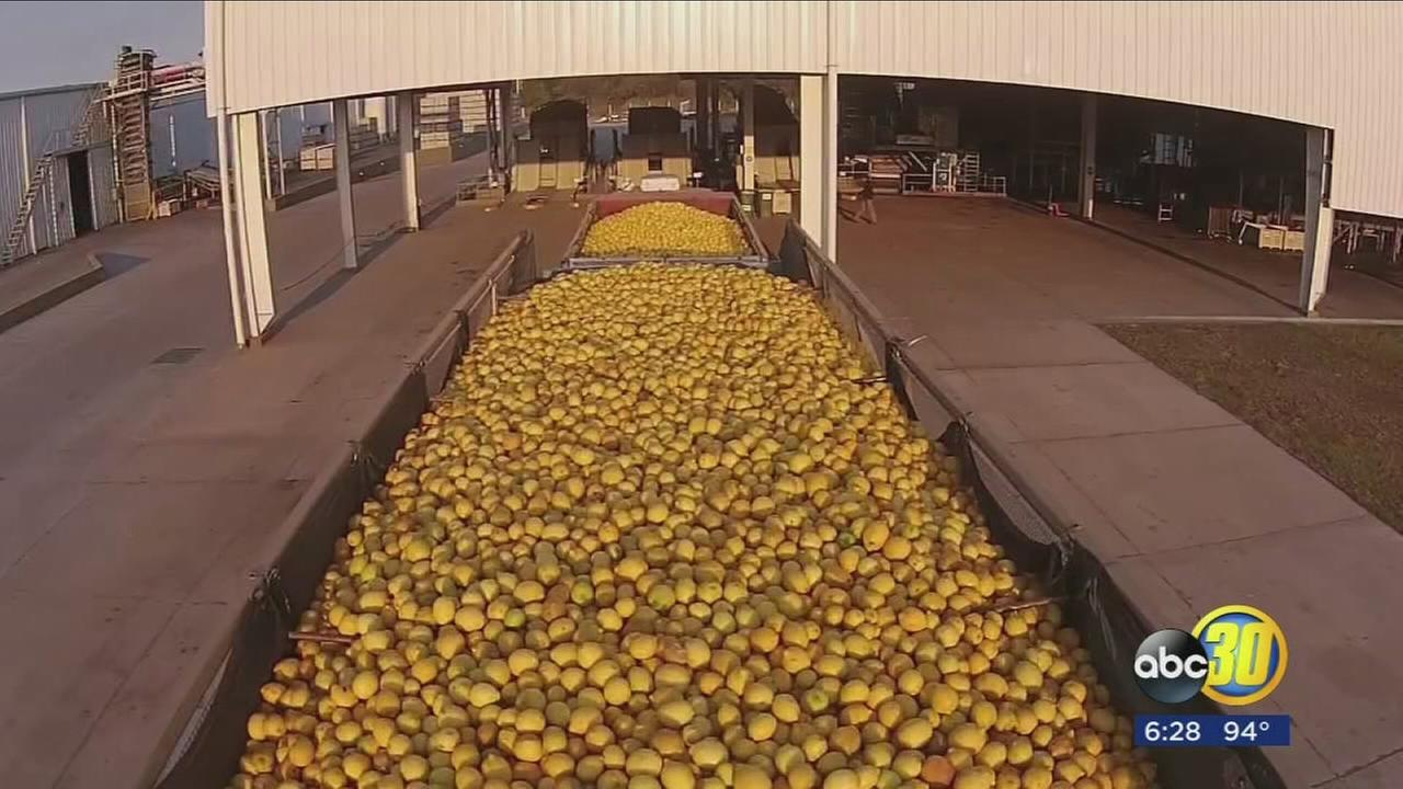 President Trump agrees to end import ban on lemons from Argentina