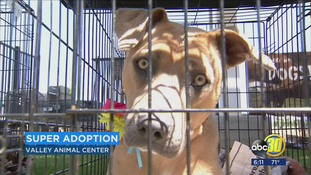120 animals find their forever home at Valley Animal Center Super Adoption