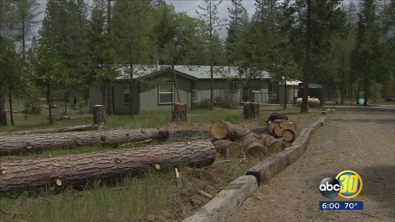 Mariposa County residents frustrated by dead, piling trees as crews clear bark beetle infestation