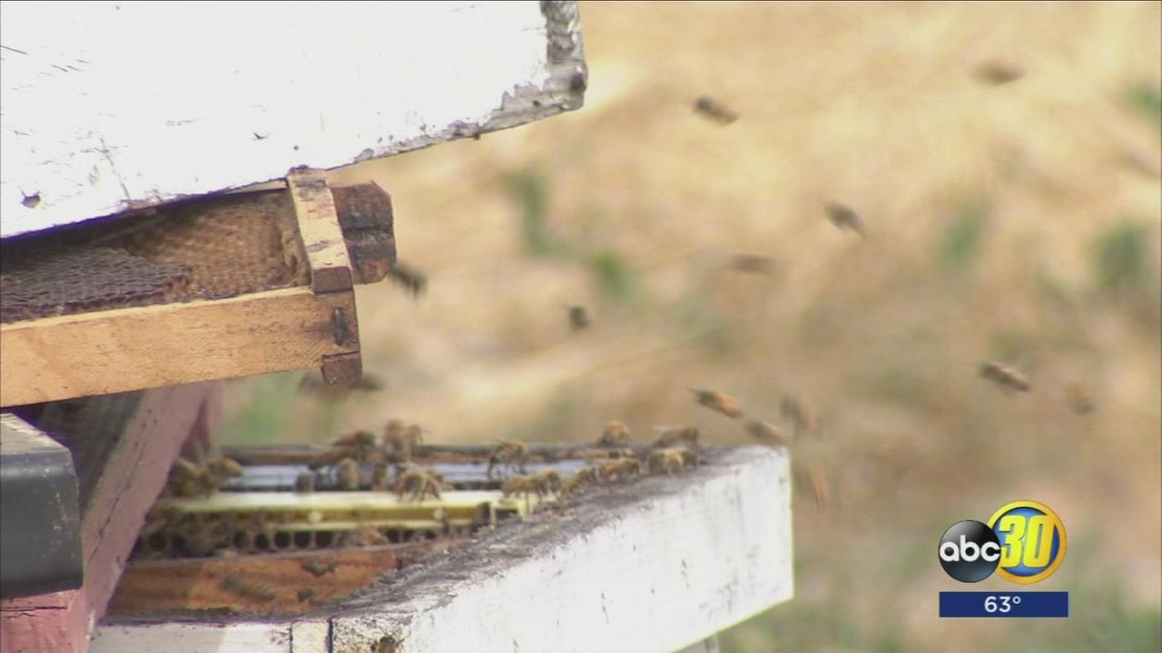Fresno County deputies recover nearly $1 million in stolen bees