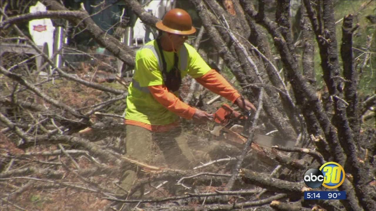 Political leader fears funding for tree mortality projects may dry up