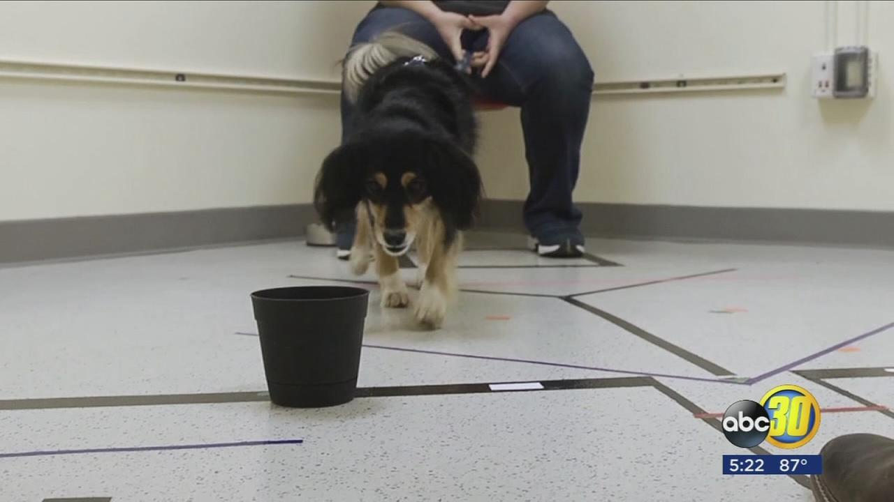 Research shows dogs are not only smart but may be able to pick up non-verbal cues