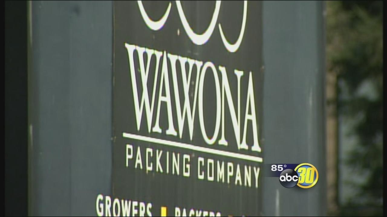 Wawona Packing Company recalls stone fruit over listeria concerns