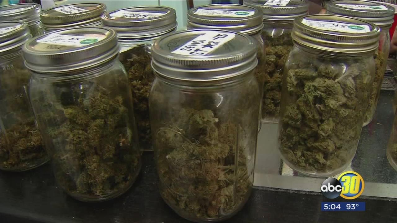 Vendors could soon be passing out free marijuana samples at county fair