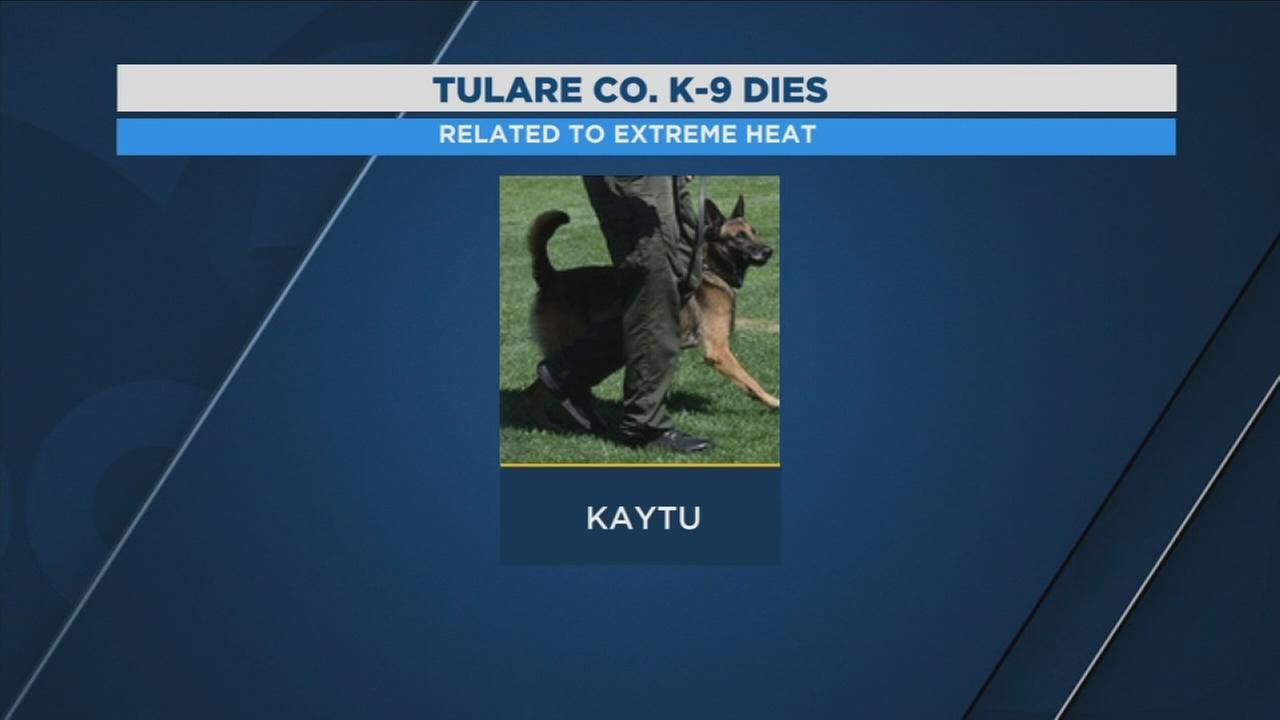 Tulare County Sheriffs Department says K-9 officer passes away
