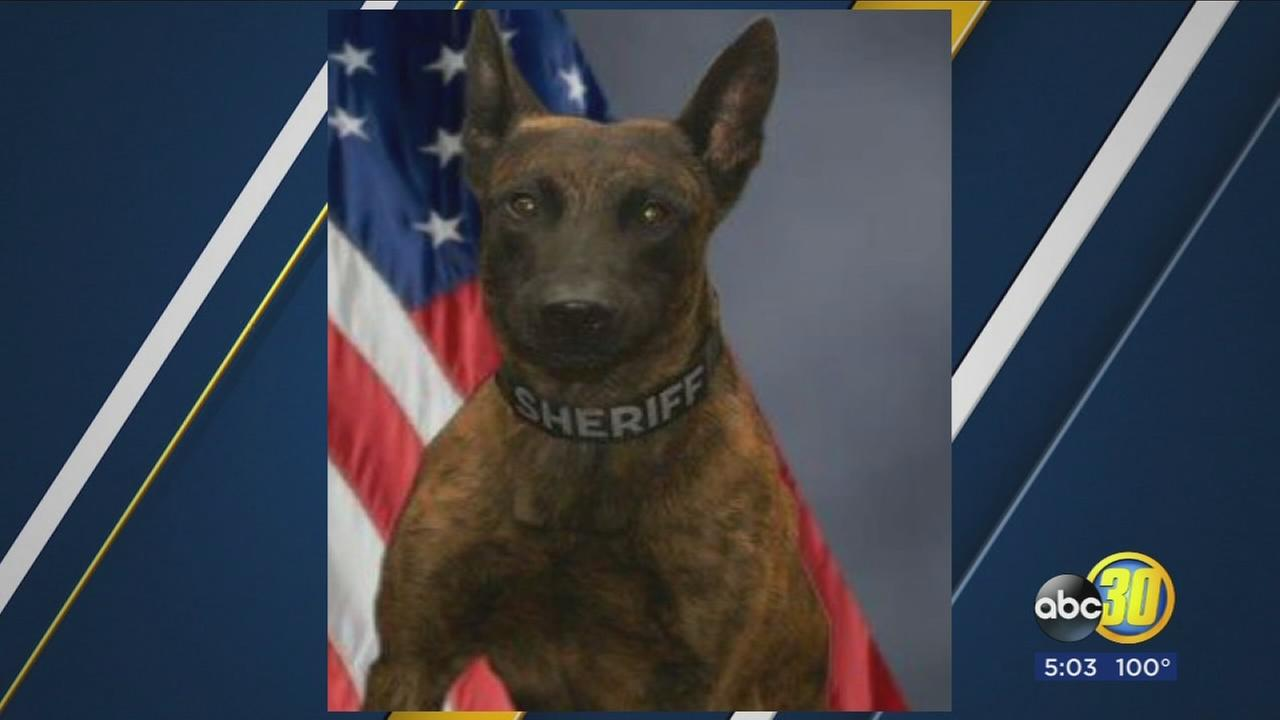 Fresno County Sheriff K9 hit by friendly fire during SWAT operation