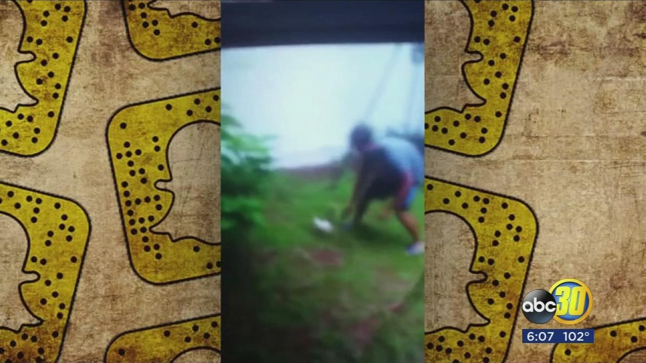 Authorities in Florida looking for teens who were seen in Snapchat video tazing cat
