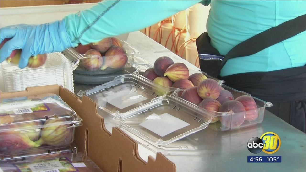 Valley farmers celebrate beginning of fig harvest