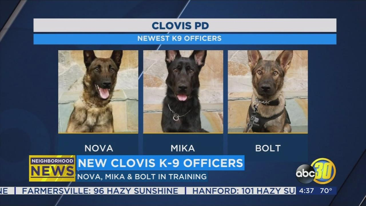 Clovis Police welcome new K-9 officers
