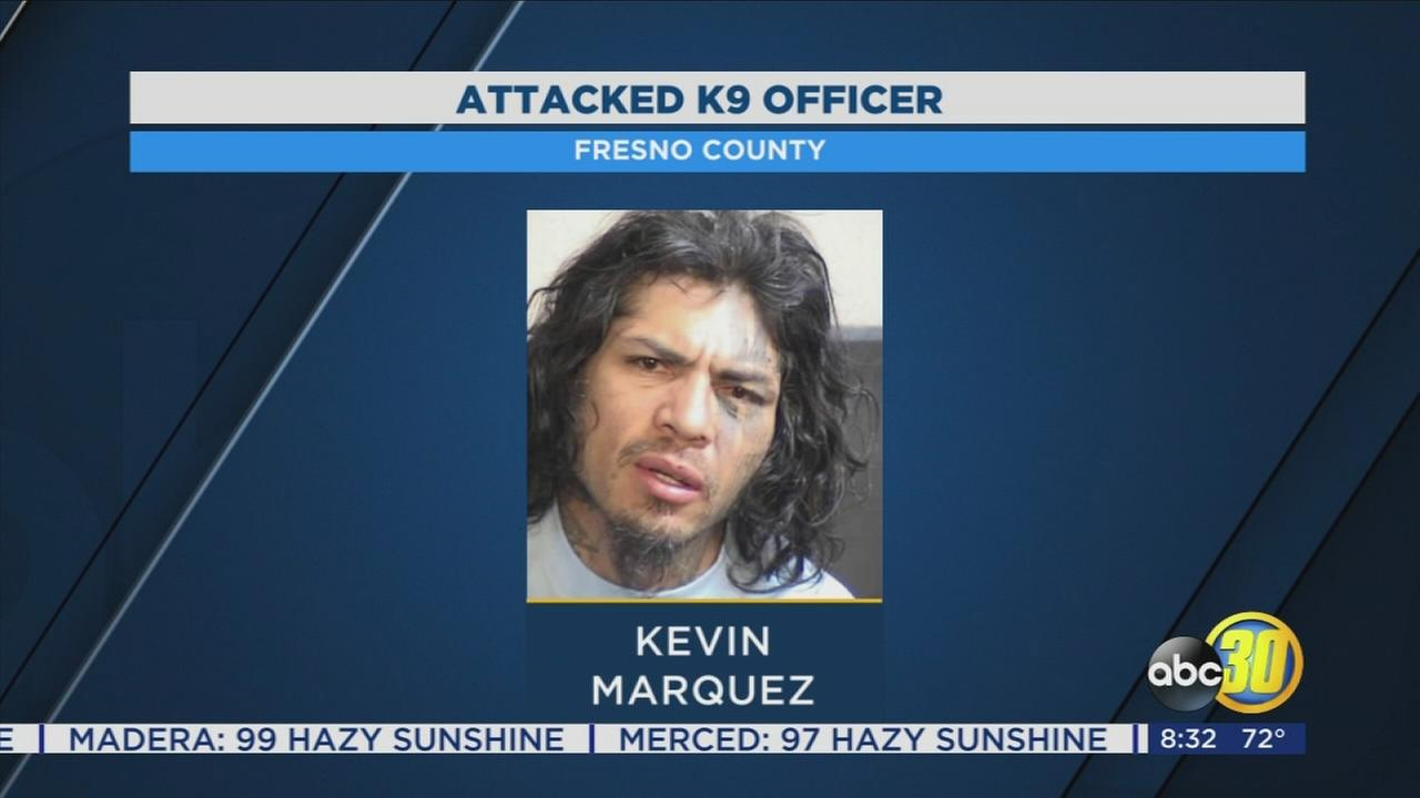 Fresno County Sheriffs Office arrests robbery suspect who also attack K-9 officer