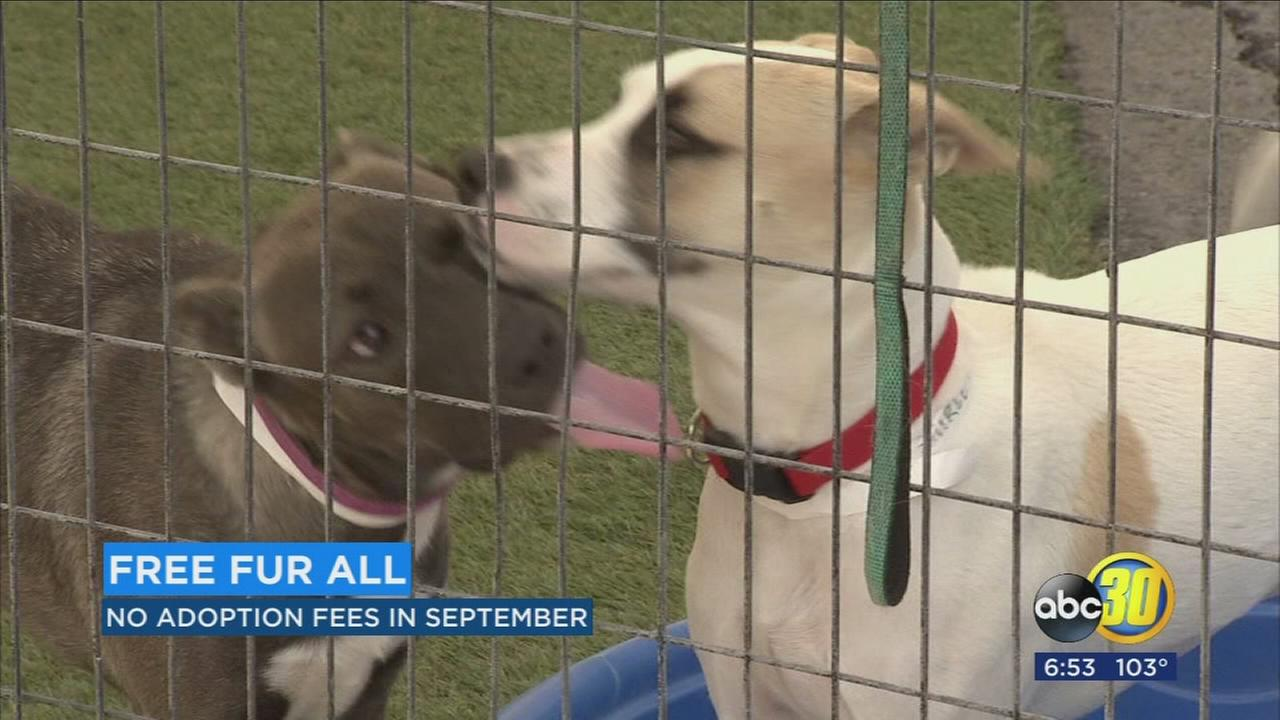 Fresno Humane Animal Services hosting free fur all adoption