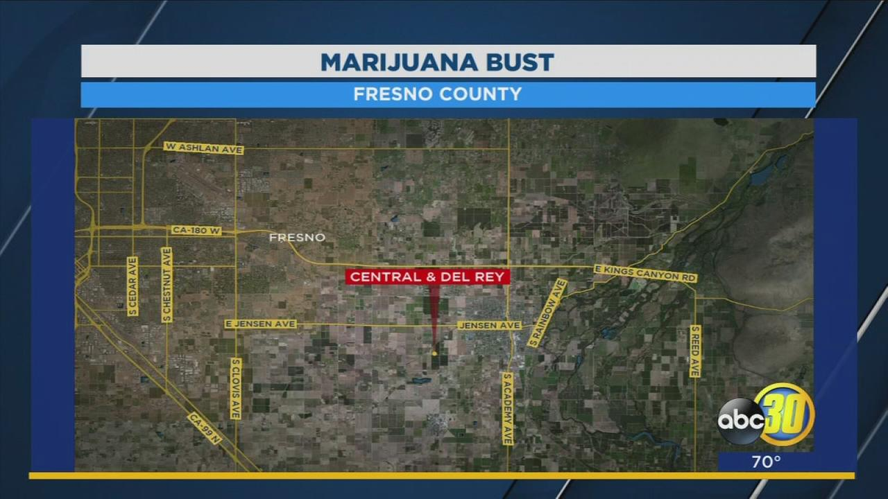 Fresno County Sheriffs Deputies shut down marijuana grow operation near Sanger