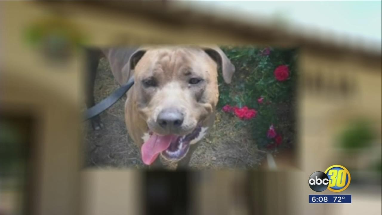 Visalia dog owner files federal lawsuit against city