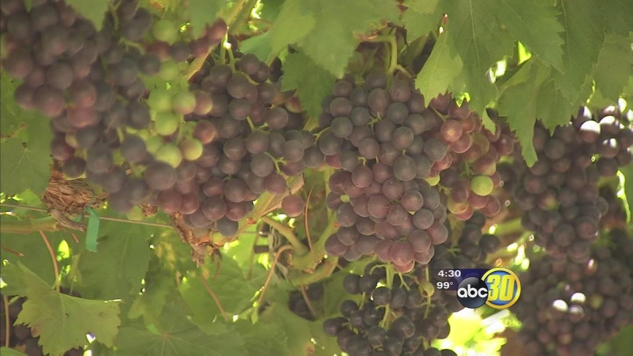 Water crisis reducing Valley fruit production