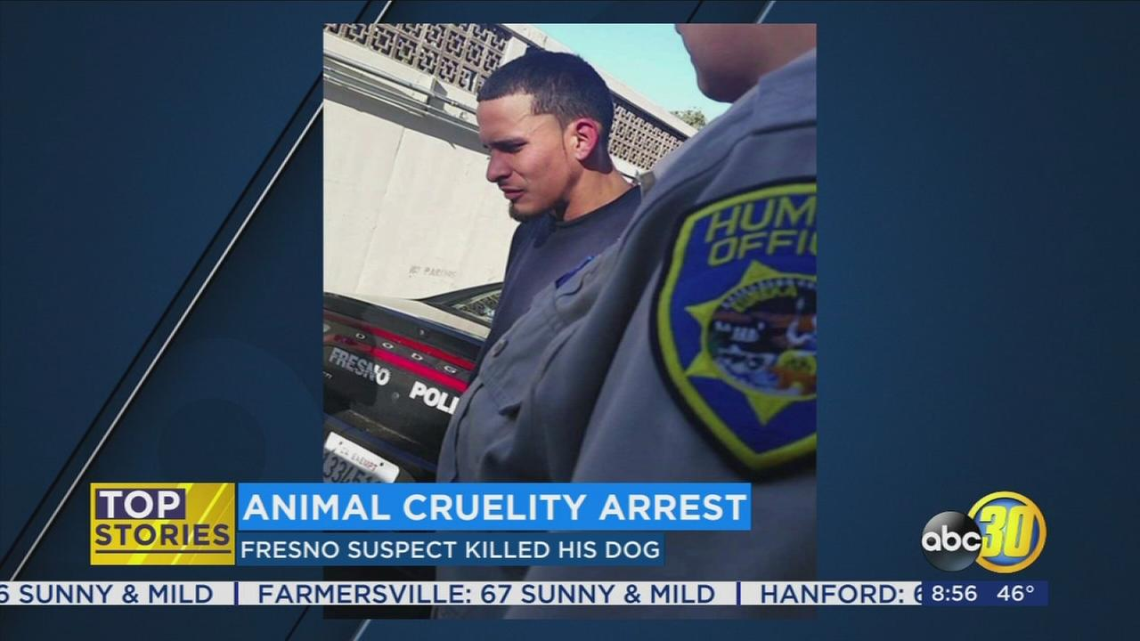 Animal cruelty arrest