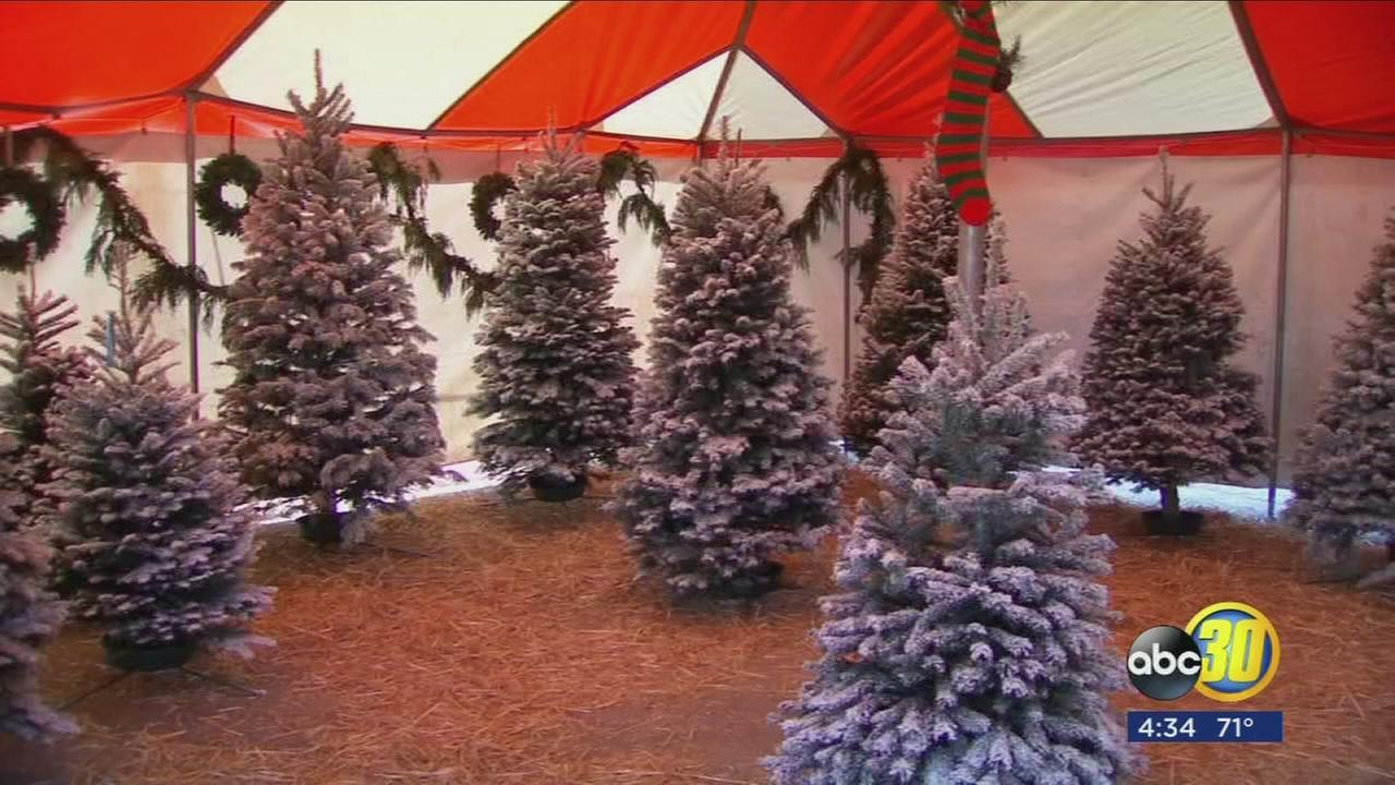Consumers will pay more this year for fresh Christmas trees amid shortages