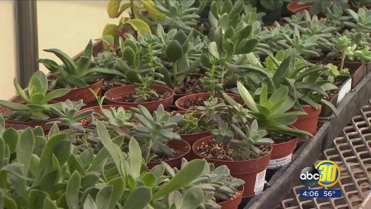 How to protect your property, pets and plants from the freeze