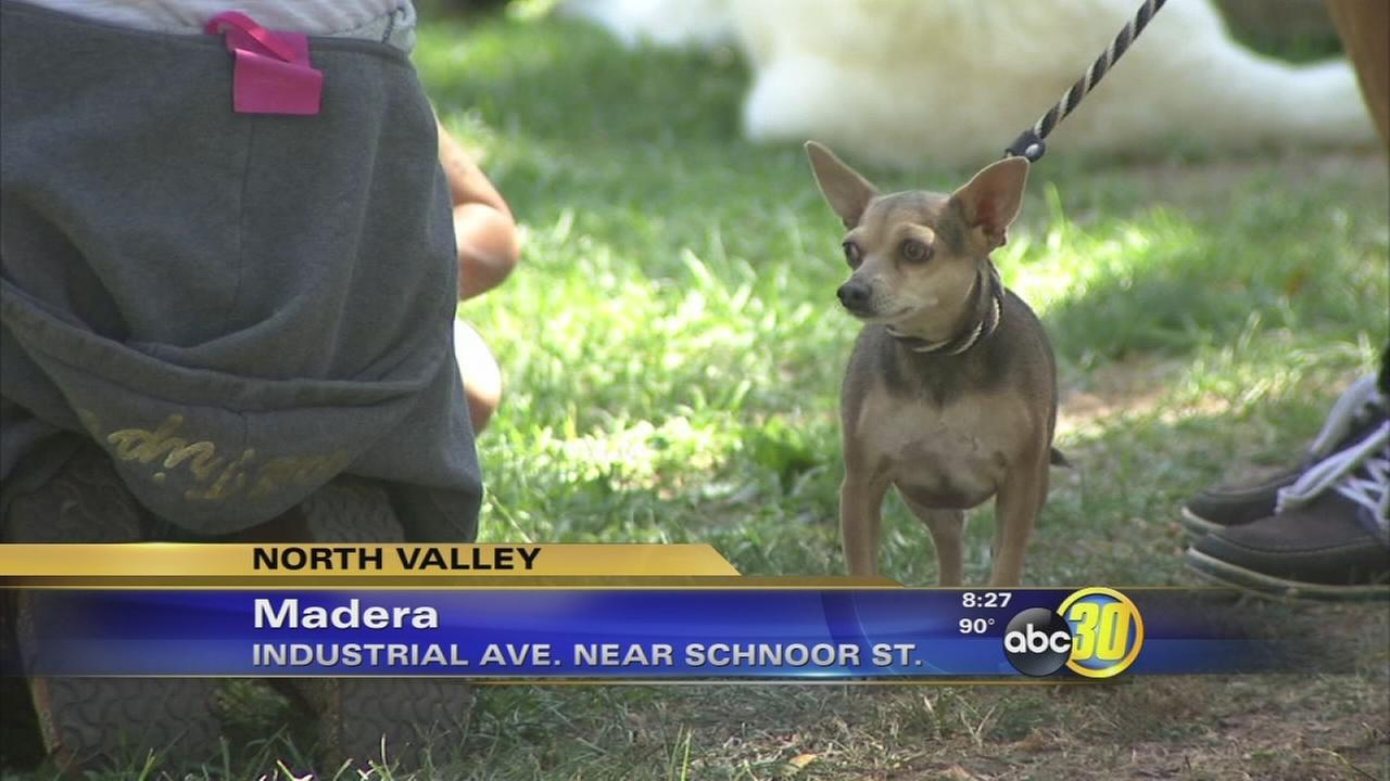 Dogs take part in 5th Bark for Life in Madera