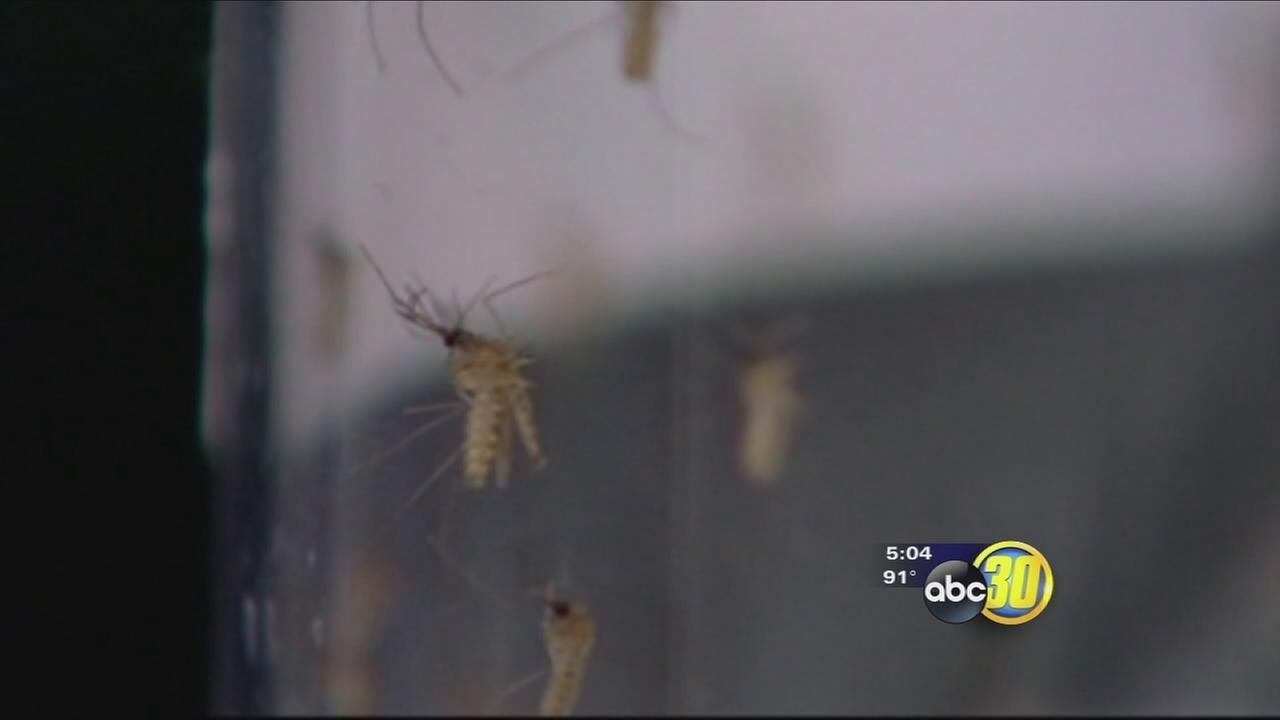 Mosquito infestation found at Clovis school
