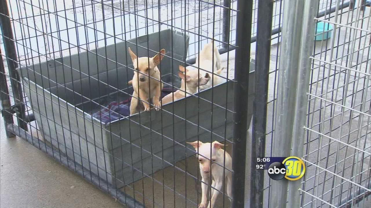 Fresno County decides to make plans for new animal shelter
