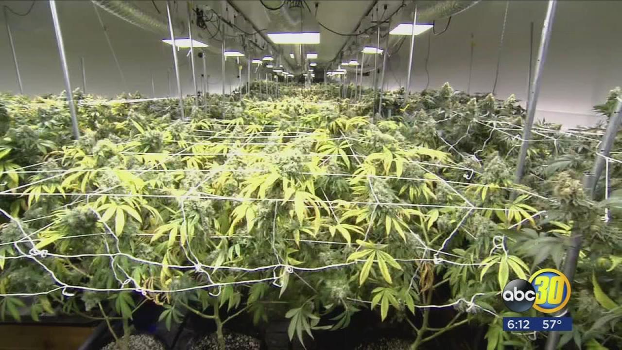 Coalingas new cash flow could be cannabis
