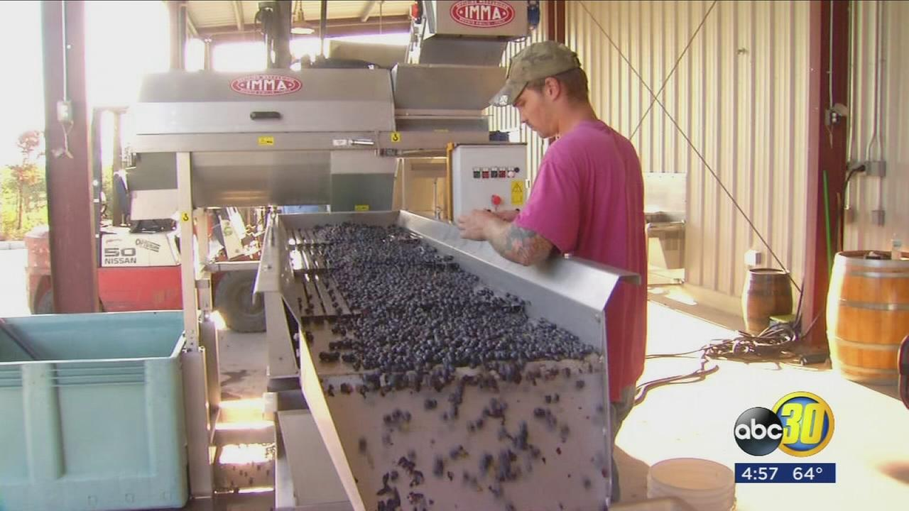 Wine making is being added to Reedley Colleges curriculum