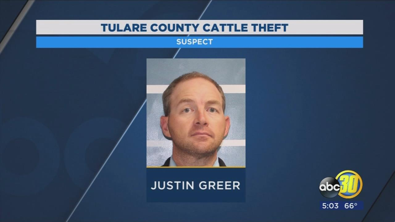 Tulare County Sheriffs Office announces major cattle theft arrest that amounts to $1.5M in losses